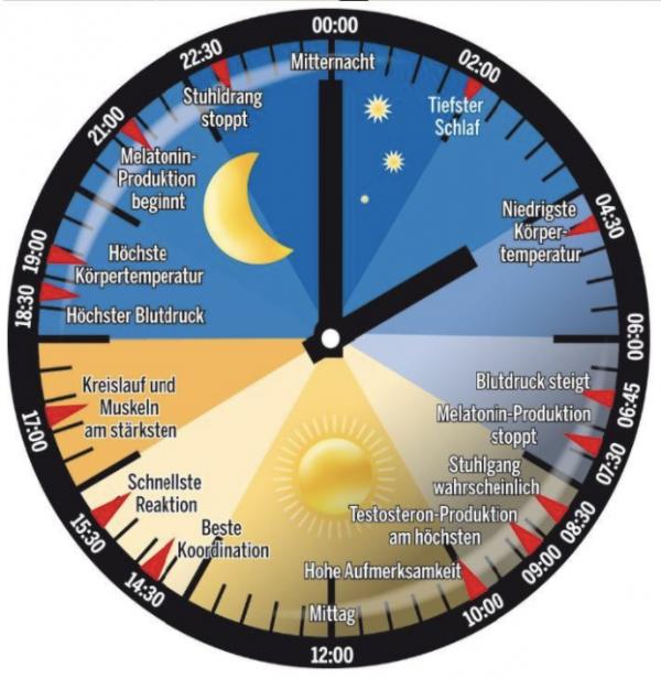 """Schichtarbeit und Schlaf – live und online. Der Schichtarbeiter lebt in einer normalen Umgebung, arbeitet und schläft jedoch zu unnatürlichen Tageszeiten. Der Organismus kann sich dieser veränderten Lebensweise nicht anpassen und reagiert mit vielfältigen Beeinträchtigungen. Dies betrifft vor allem zwei Bereiche: am Tag zu schlafen und in der Nacht wach zu bleiben. Die Folgen sind vor allem Schlafstörungen und Leistungsbeeinträchtigungen. Durch Beachtung chronobiologischer und arbeitshygienischer Strategien kann das Ausmaß dieser Störungen reduziert werden.Inhalte: Zirkadianer Rhythmus (natürlicher Schlaf- Wachrhythmus), häufige Schlafstörungen bei SchichtarbeiterInnen, Plan zur Verbesserung des """"Schichtarbeitskaters"""", Erstellung eines idealen Arbeitsplans"""